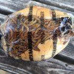 峰屋のパン!【焼きそばパンとバインミー編】
